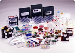ESCHERICHIA COLI TOXOGENIC PILI ANTISERUM (CLICK TO SELECT FROM LIST)